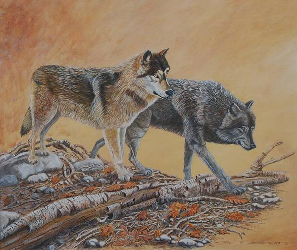 Wolves Canadian Wildlife Realistic Painting Poster featuring the painting Timber Wolves by Santo De Vita