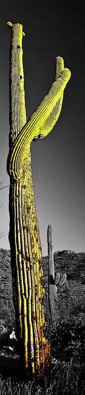 Saguaro Poster featuring the photograph Saguaro Gestures by Jerry Kalman