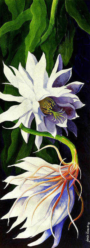 Night-blooming Cereus Poster featuring the painting Night Blooming Cereus by Janis Grau