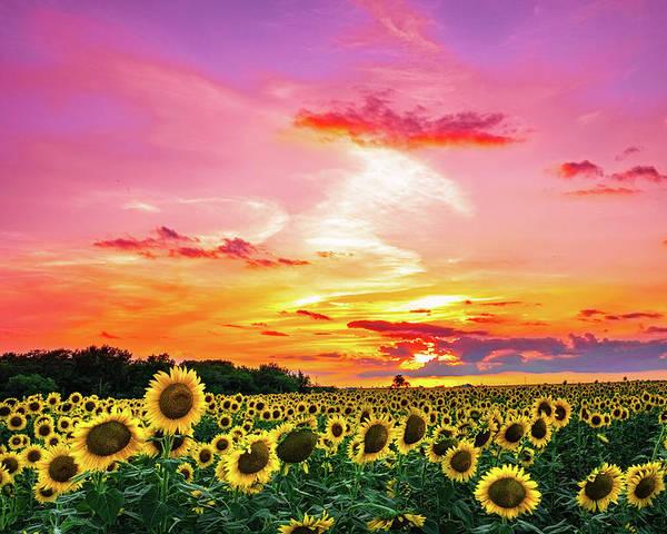 Sunflower Sunset III by KC Hulsman