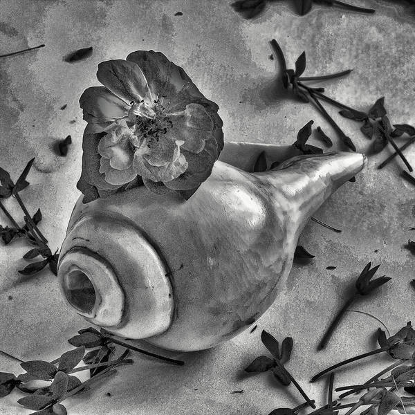 Still Life Poster featuring the photograph A Shell For Music by Rochak Timilsina