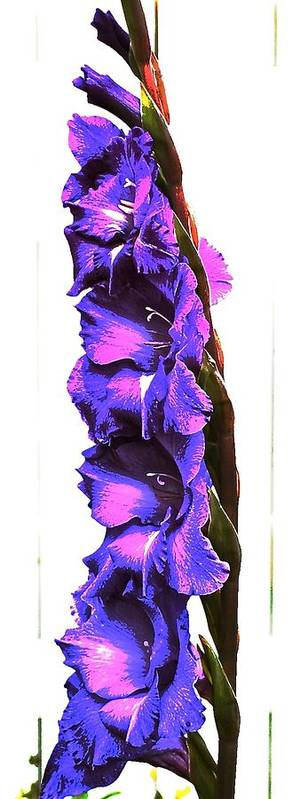 Flower Poster featuring the photograph Glad I'm Purple by Katy Granger