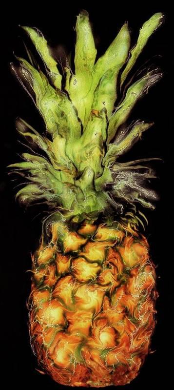 Paul Tokarski Poster featuring the photograph Golden Pineapple by Paul Tokarski