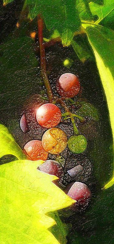 Harvest Time Poster featuring the photograph Harvest Time by Ron Regalado