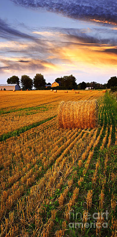 Farm Poster featuring the photograph Golden Sunset Over Farm Field With Hay Bales by Elena Elisseeva