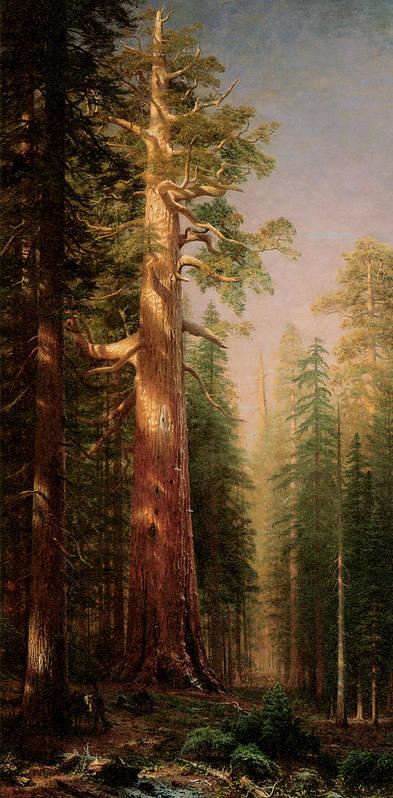 Albert Bierstadt Poster featuring the painting The Great Trees Mariposa Grove California by Albert Bierstadt