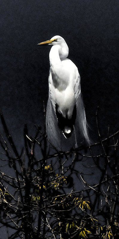Egret Poster featuring the photograph Against A Silver Sky by J DeVereS