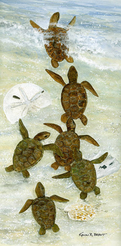 Turtles Poster featuring the painting March To The Sea by Kevin Brant
