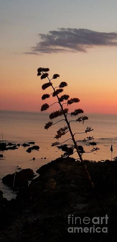 Sunset Poster featuring the photograph Wild Sunset by Paola Baroni