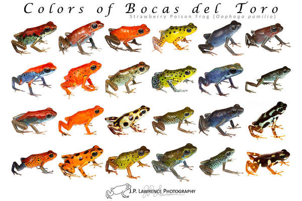 Colors of Bocas del Toro by JP Lawrence
