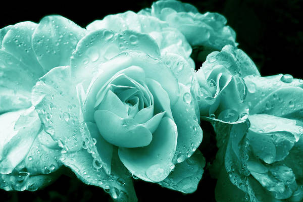 Teal Roses with Raindrops  by Jennie Marie Schell