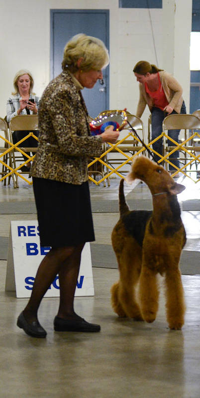 2015. Judge: Mr. Del Richards Poster featuring the photograph You Did Good So Did You by Dog Show Video