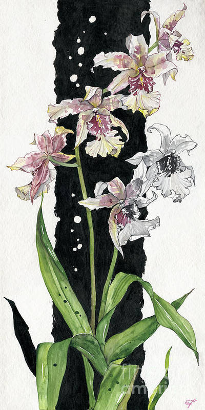 Art Poster featuring the painting Flower Orchid 06 Elena Yakubovich by Elena Yakubovich