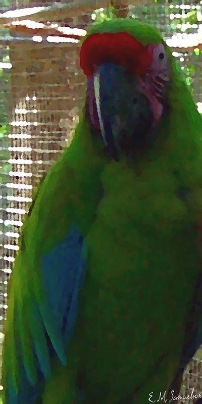 Parrot Poster featuring the photograph Green Parrot by Elise Samuelson