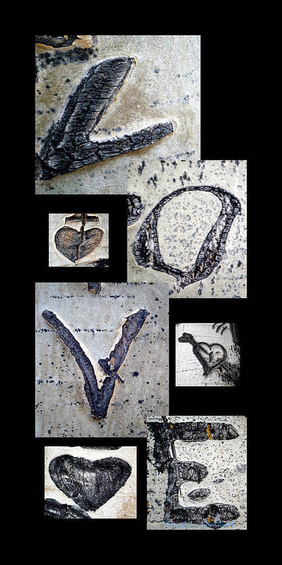 Photo Poster featuring the photograph Love Written In The Trees 4 by Tamara Kulish