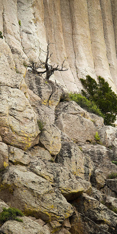 Cliff Poster featuring the photograph Natures Selection by Chad Davis