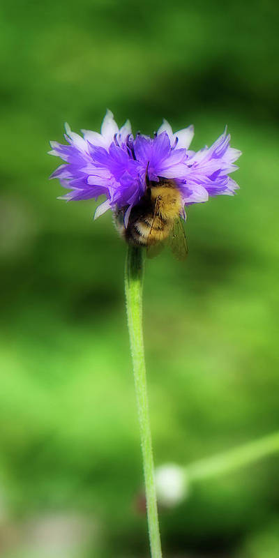 Bee Poster featuring the photograph Work Mundane - Change Your Perspective by Lisa Knechtel