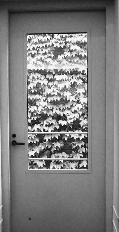 Ivy Poster featuring the photograph Ivy Door by Anna Villarreal Garbis