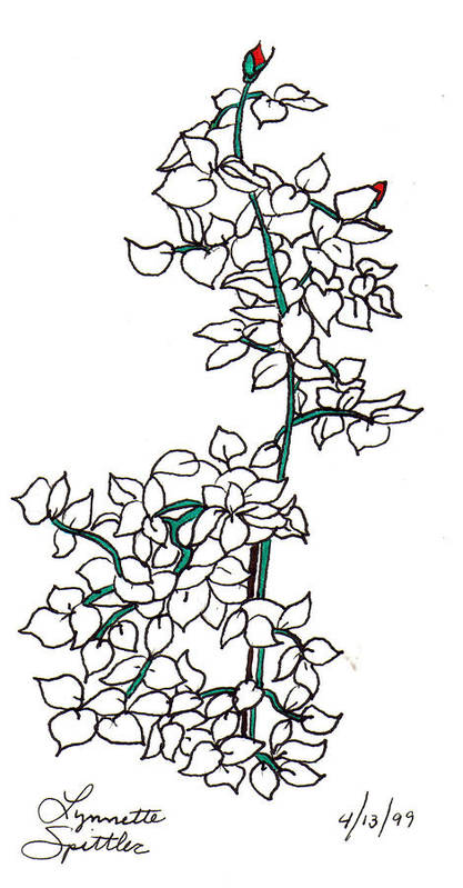 Poster featuring the drawing Young Rose Bush by Lynnette Jones