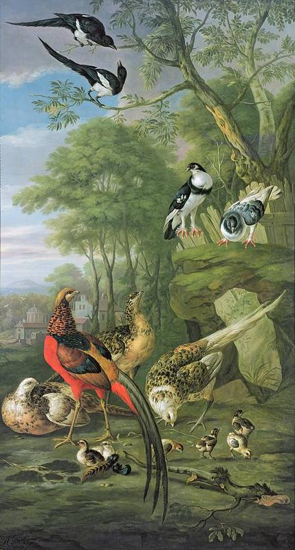 Ornithology Poster featuring the painting Cock Pheasant Hen Pheasant And Chicks And Other Birds In A Classical Landscape by Pieter Casteels