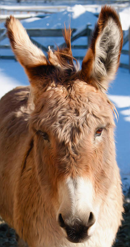 Donkey Poster featuring the photograph Painted Donkey 1 by T C Hoffman