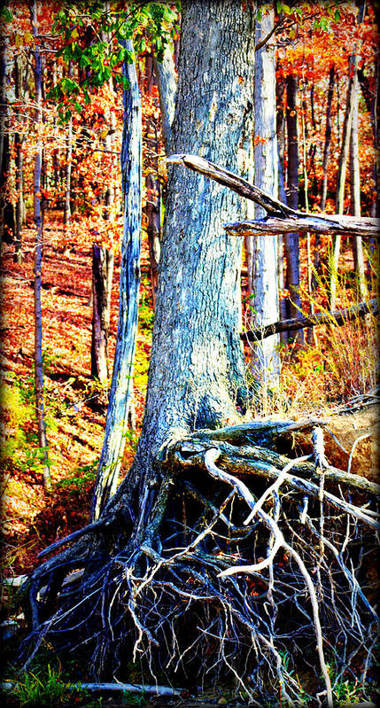 Tree Poster featuring the photograph Dry Docked by Susie Weaver