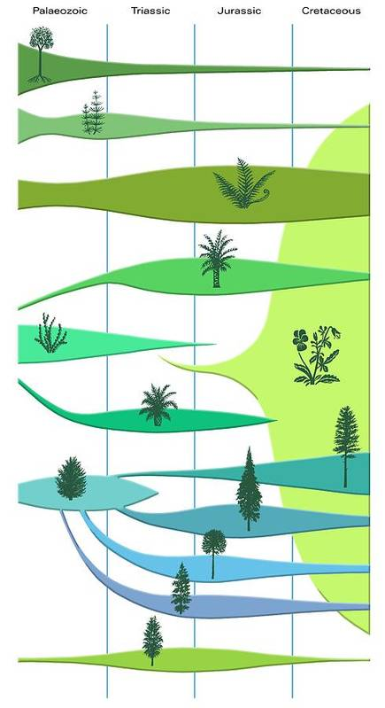Lycopodiopsida Poster featuring the photograph Plant Evolution, Diagram by Gary Hincks
