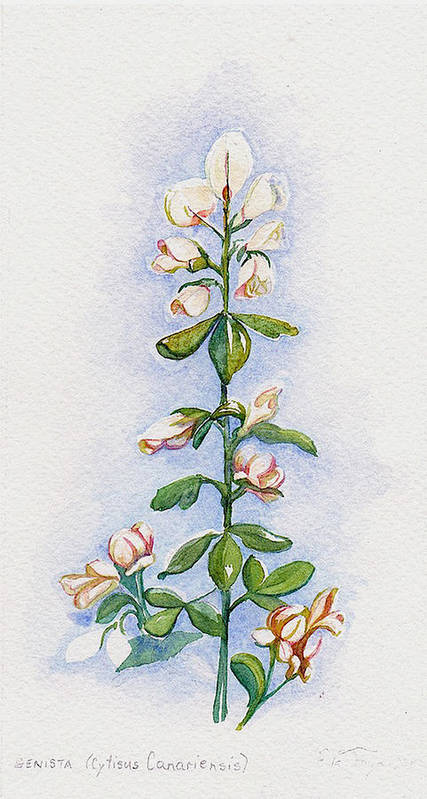 Art Poster featuring the painting Genista by Elle Smith Fagan