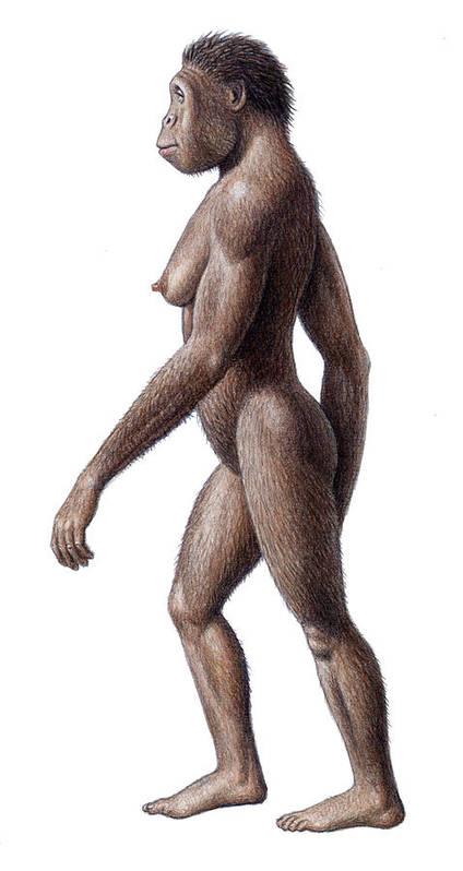 Australopithecus Africanus Poster featuring the photograph Female Australopithecus Africanus by Mauricio Anton