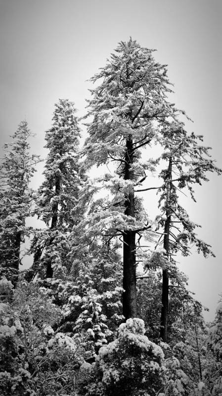 Snow Poster featuring the photograph Frozen Beauty by Betty Depee