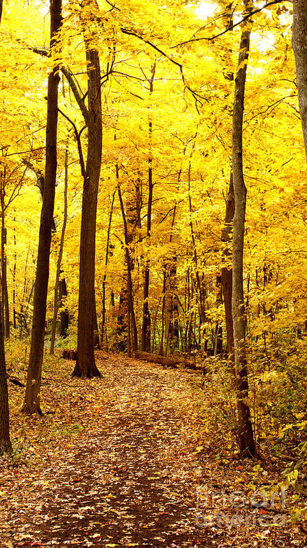 Autumn Poster featuring the photograph Golden Path by Valerie Fuqua