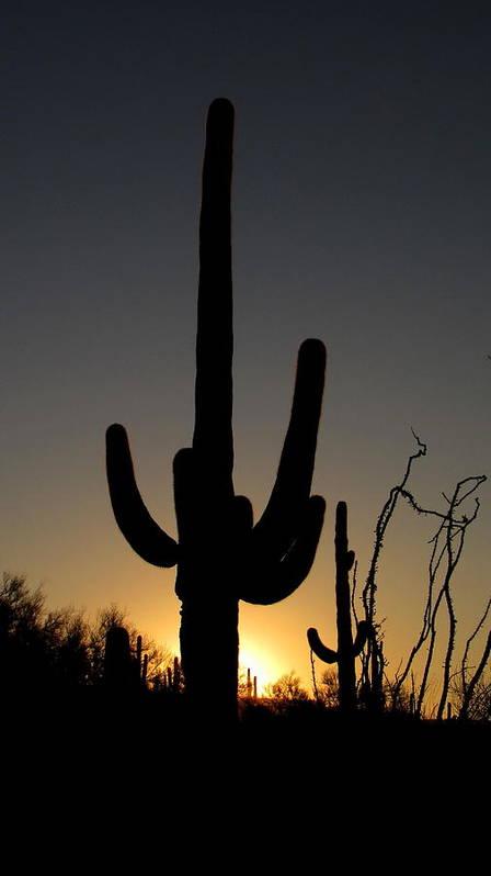 Desert Poster featuring the photograph Southwest Sunrise by Dabin Lambert