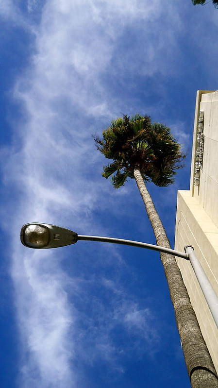Palm Tree Poster featuring the photograph Palm And Streetlight by Peter Breaux