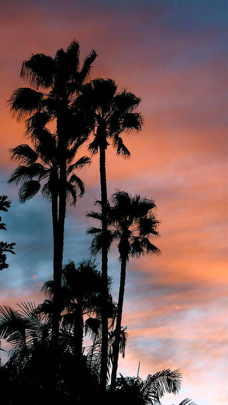 Palm Tree Poster featuring the photograph Urban Palms by Peter Breaux