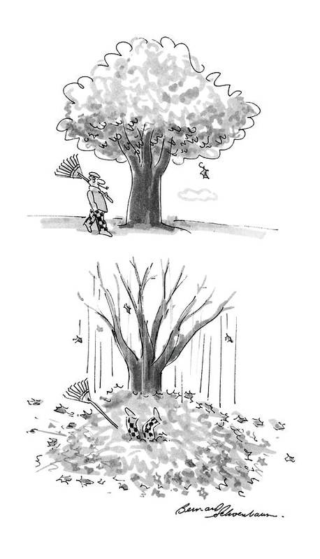 No Caption Two Panel Drawing. In The First A Man Is Walking By A Tree With A Rake In His Hand. In The Second All Of The Leaves Have Fallen Off Of The Tree Poster featuring the drawing New Yorker October 17th, 1988 by Bernard Schoenbaum