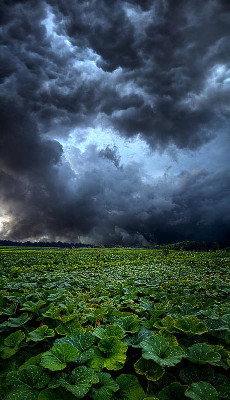 Storms Poster featuring the photograph Reclusive by Phil Koch
