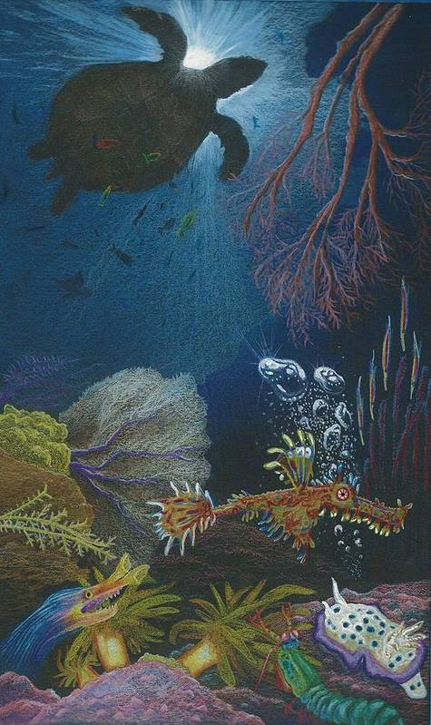 Ocean Poster featuring the drawing Indigenous Aquatic Creatures Of New Guinea by Beth Dennis
