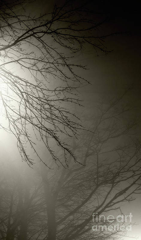 Trees Poster featuring the photograph Branches In The Fog by Susan Isakson