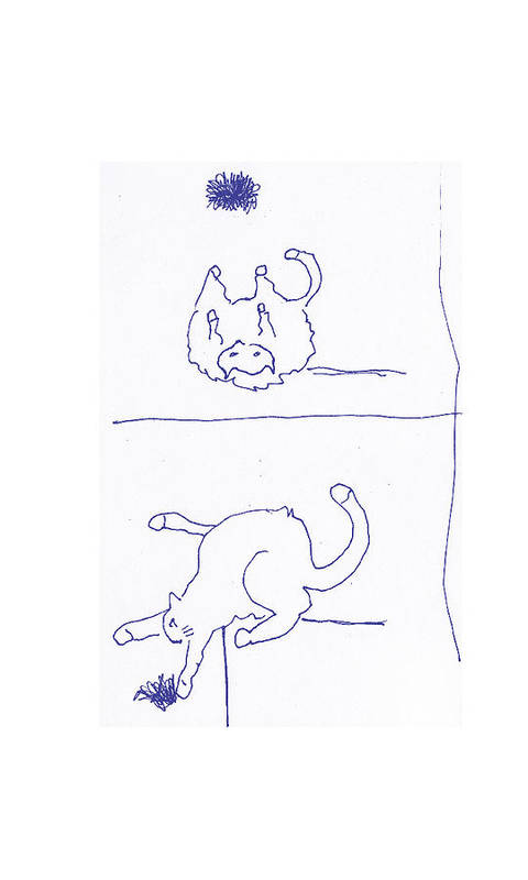 Cats Poster featuring the drawing Toupe3 by Samuel Zylstra