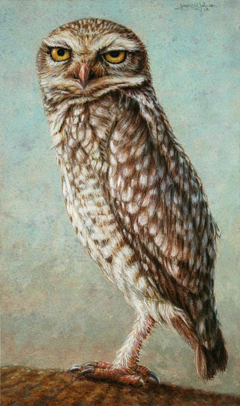 Owl Poster featuring the painting Burrowing Owl by James W Johnson