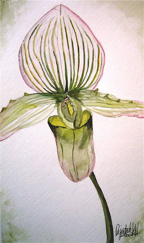 Watercolor Poster featuring the painting Green Slipper Orchid by K Hoover