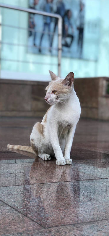 Wallpaper Poster featuring the photograph Cat Sitting On Marble Floor by Prashant Dalal
