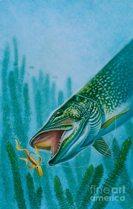 Jon Q Wright Poster featuring the painting Pike And Jig by Jon Q Wright