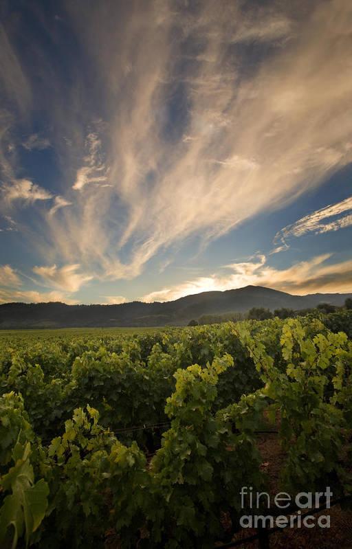 Vineyard Poster featuring the photograph California Vineyard Sunset by Matt Tilghman