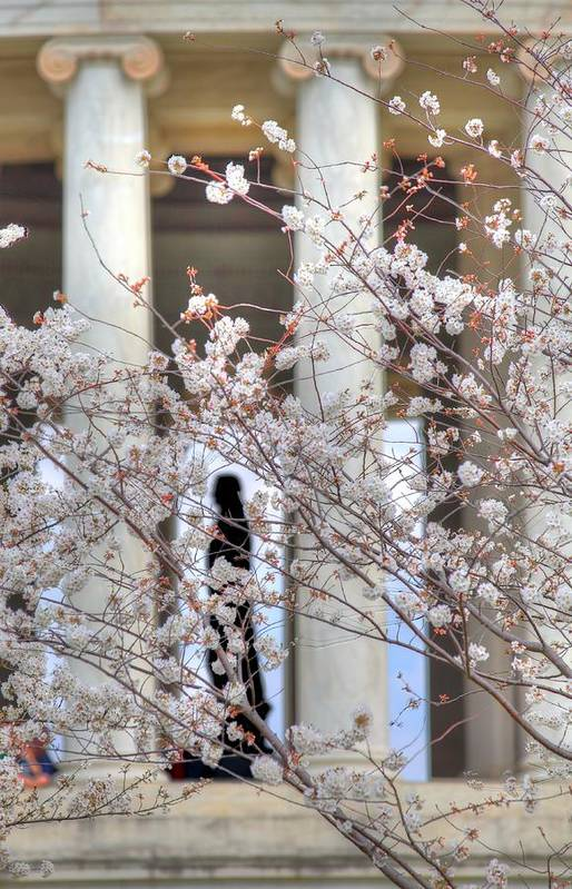 Metro Poster featuring the photograph Cherry Blossoms Washington Dc 1 by Metro DC Photography