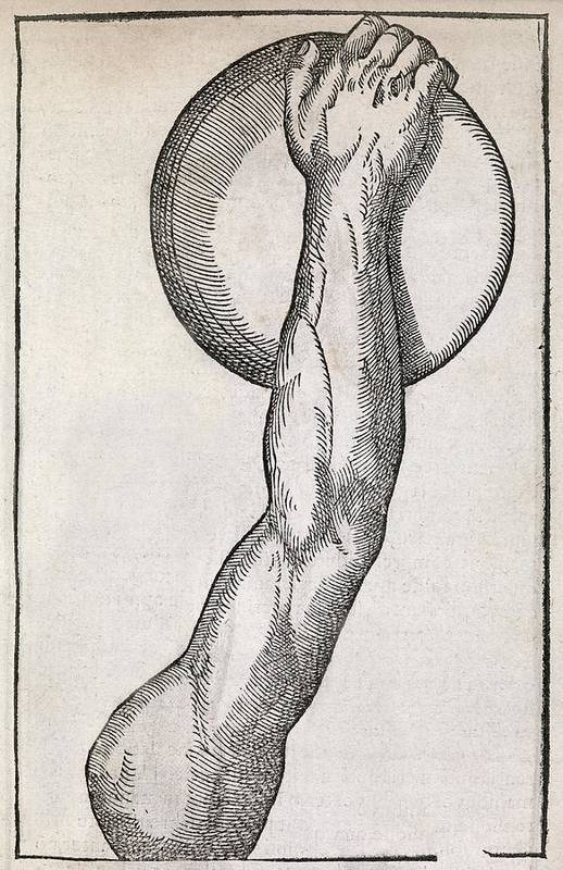 Human Poster featuring the photograph Discus Throwing, 16th Century Artwork by Middle Temple Library