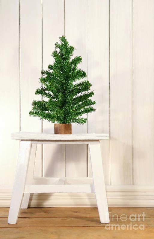 Bright Poster featuring the photograph Little Green Fir Tree by Sandra Cunningham