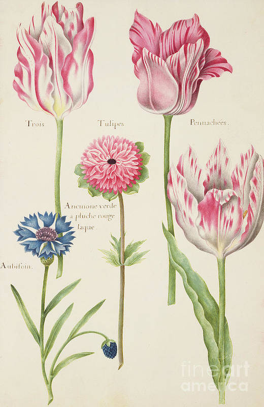 Still-life Poster featuring the painting Tulips by Nicolas Robert