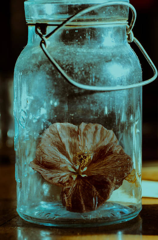Canning Jars Poster featuring the photograph Canned Spring by Susan Capuano