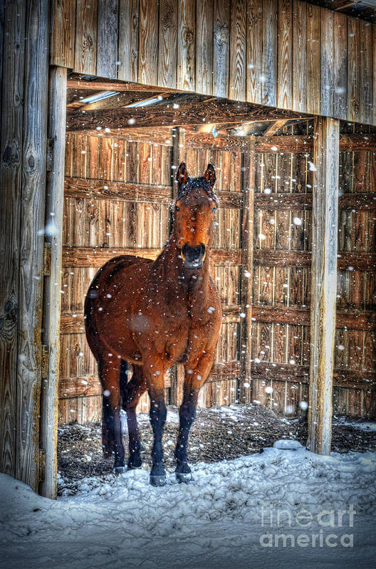Horse Poster featuring the photograph Horse And Snow Storm by Dan Friend